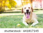 Stock photo pure happiness and joy 641817145