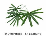 palm leaves isolated. | Shutterstock . vector #641838349