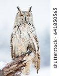 Siberian Eagle Owl  Bubo Bubo...