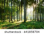 morning in the forest | Shutterstock . vector #641858704