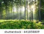 morning in the forest | Shutterstock . vector #641858809