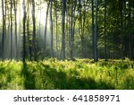 morning in the forest | Shutterstock . vector #641858971