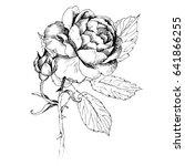 wildflower peony flower. hand... | Shutterstock .eps vector #641866255