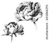 wildflower peony flower. hand... | Shutterstock .eps vector #641866291