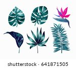 vector tropical trendy summer... | Shutterstock .eps vector #641871505