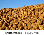 Pile of sugar beets on a farm - stock photo