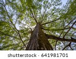 swamp cypress branches on blue... | Shutterstock . vector #641981701