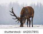 stag   mature deer    trophy... | Shutterstock . vector #642017851