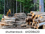 Sawed Firewood Dropped In A...