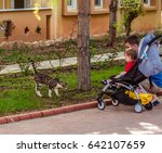 Small photo of Alanya, Turkey-May, 3, 2017: A small child in a stroller, dad and a cat together on nature. Parents from childhood instill in children love for animals. Son and father of European appearance.