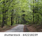 desolate road in forest with... | Shutterstock . vector #642218239