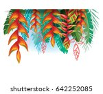 arrangement with heliconia... | Shutterstock .eps vector #642252085