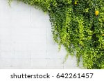 Abstract Green Ivy Plant On...