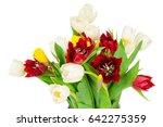 Photo Of Tulips Isolated On...