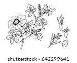 vector illustration of a wild... | Shutterstock .eps vector #642299641