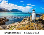 Small photo of Fanny african black - white penguin on the beach of Atlantic.The boulders and algae. Boulders Penguin Colony National Park, South Africa. The concept of ecotourism