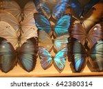 butterfly specimen collection | Shutterstock . vector #642380314