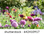 Cottage Garden With Wild Flowers