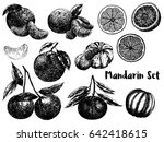 hand drawn sketch set of... | Shutterstock .eps vector #642418615