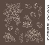 collection of shea  shea nut... | Shutterstock .eps vector #642420721