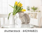 Cute Cat And Jug With Flowers...