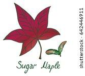 sugar maple  acer saccharum or...