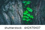 Photo Depicts A Pine Tree Trun...