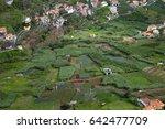 madeira  green agricultural... | Shutterstock . vector #642477709