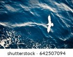 Small photo of Top view of silhouette of flying seagull. Bird flies over the Sea. Flight of bird with Blue Sea. Seagull hovers over deep blue Sea. Gull hunting down fish. Free flight Gull over Boundless Expanse air