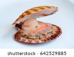 Scallop Open Shell On White...