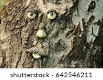 face of an old tree | Shutterstock . vector #642546211