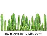 Cactus On Isolated Background.