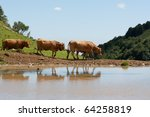 cows drink water on lake | Shutterstock . vector #64258819