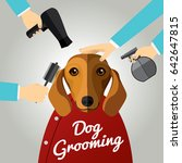 Dachshund Getting Groomed At...