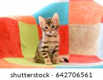 Stock photo cute bengal kitten in a multi colored chair 642706561