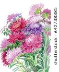 watercolor asters | Shutterstock . vector #642738385