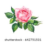 Pink Rose With Leaves....