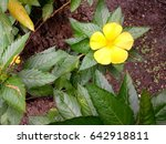 yellow flower with its plant | Shutterstock . vector #642918811