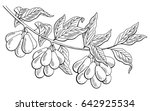 dogwood berry graphic branch... | Shutterstock .eps vector #642925534