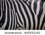 zebra | Shutterstock . vector #642931141