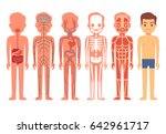 human body anatomy . male... | Shutterstock . vector #642961717