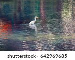 Small photo of Great white egret (American egret) hunting for small fish in a mountain pond with clear water. Bill as throwing spear, bird kills fish with lightning speed. Beautiful glare and reflections