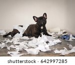 funny dog made a mess in the... | Shutterstock . vector #642997285