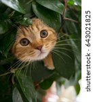 Stock photo cat in a flower pot in ambush 643021825