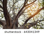 looking up from under the tree...   Shutterstock . vector #643041349