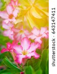Small photo of Adenium obesum flower Medicinal Plants in garden with warm light, soft tone