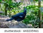 blue bird is formidable | Shutterstock . vector #643235461
