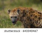 hyena south africa | Shutterstock . vector #643340467