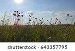 meadow | Shutterstock . vector #643357795