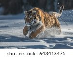 siberian tiger in the snow ... | Shutterstock . vector #643413475